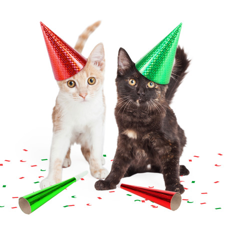 Two adorable little kittens wearing party hats with confetti and noise makers