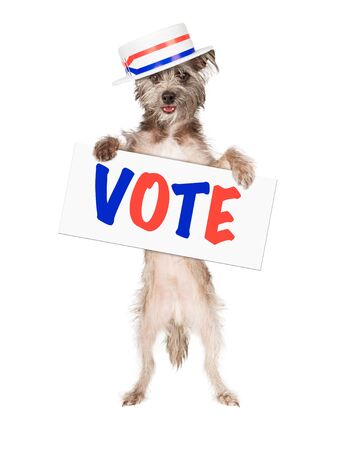Dog wearing politician hat holding red, white and blue vote sign