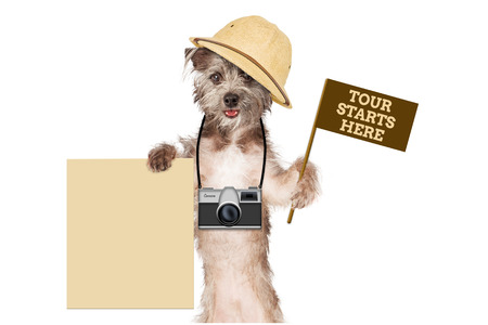 A cute dog safari guide with a camera, tour flag and blank sign