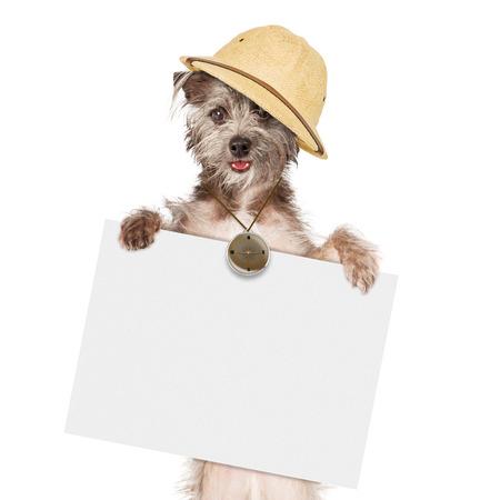guia turistico: Gu�a perro br�jula uso de la celebraci�n de firmar en blanco