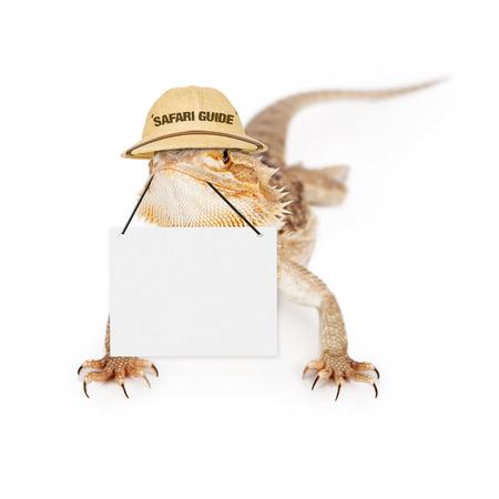 bearded dragon lizard: A bearded dragon lizard wearing safari guide hat holding blank sign to enter marketing message