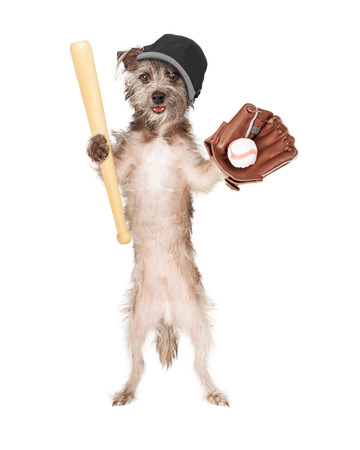Dog wearing baseball hat