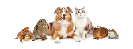 Group of domestic animals sized to fit popular social media timeline cover place holder Foto de archivo
