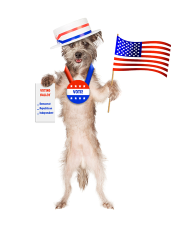 Cute dog wearing politician hat and vote button holding American flag and voting ballot