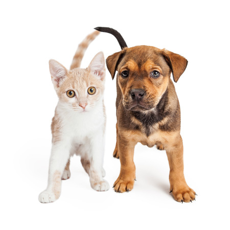 A cute kitten and a puppy standing together on a white background
