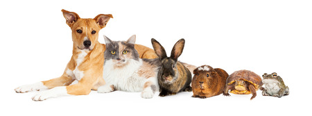Group of domestic animals including dog, cat, buny, guinea pig, turtle and frog