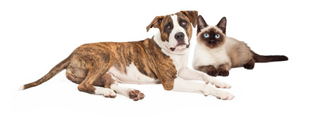 Cute dog and cat together. Image sized for popular social media timeline cover image photo