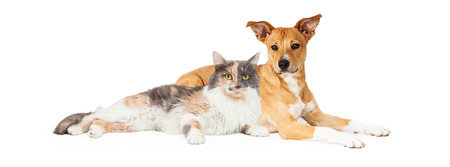 Mixed breed dog and calico cat laying together