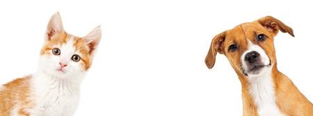 Leuk katje en puppy glurend van de kant van een witte banner met ruimte voor tekst Stockfoto