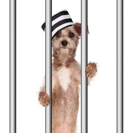 funny image: Funny image of a bad dog wearing a prisoner hat in jail holding onto the prison bars