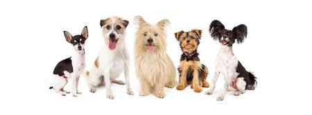 Eine Reihe von sechs Hunde kleiner Rassen zusammen sitzen