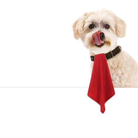 Funny image of a cute dog with a messy dace licking his lips while wearing a red napkin that is hanging over a blank white sign Banco de Imagens