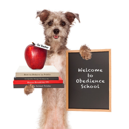 Funny image of dog holding books on animal training, an apple for teacher and sign saying welcome to obedience school