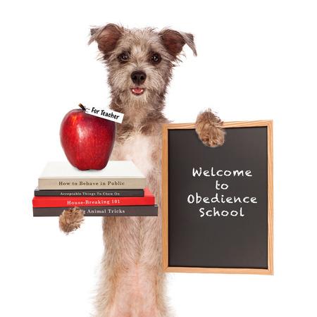 obediencia: Imagen divertida de perro sosteniendo libros en el entrenamiento animal, una manzana para el profesor y firmar diciendo bienvenido a la escuela de obediencia