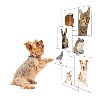 scrolling: Funny image of a small dog scrolling through a digital photo wall