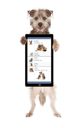 Cute and happy dog holding up a smartphone with a funny social media page on the screen