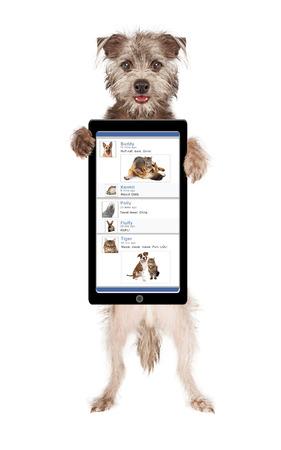 perros graciosos: Perro lindo y feliz celebración de un smartphone con una página divertida medios de comunicación social en la pantalla Foto de archivo