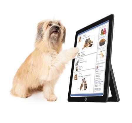 interaccion social: Un perro grande desplazamiento a través de un sitio web de medios sociales en un dispositivo tablet Foto de archivo