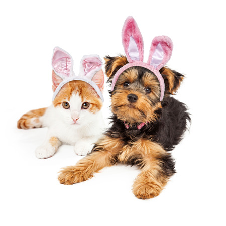 Cute puppy and kitten laying together wearing pink Easter Bunny ears Stock Photo