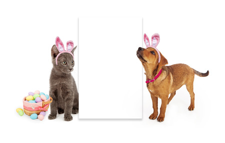 A young kitten and puppy sitting to the side of a blank white sign wearing Easter Bunny ears with a basket of colorful eggs Stock Photo