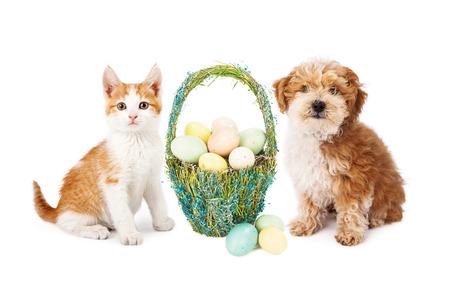 Een schattig kitten en puppy hond zitten naast een mooie strooien Pasen mand gevuld met kleurrijke eieren Stockfoto