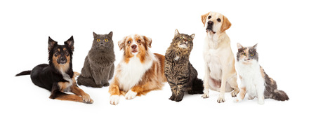 gray cat: A row of dogs and cats of different breeds