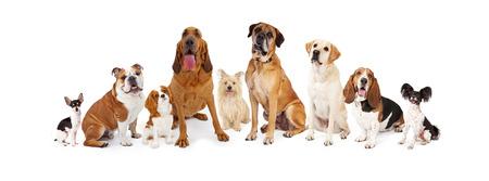 様々 なサイズの異なる品種の共通の犬の大規模なグループ