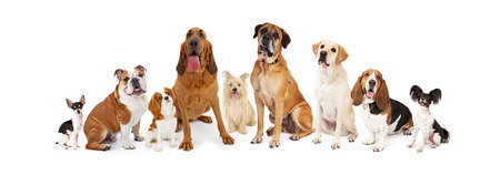 white space: A large group of common dogs of different breeds that are various sizes Stock Photo