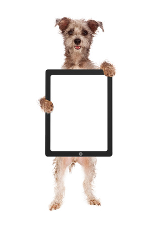 blank tablet: A cute and happy dog holding up a tablet computer device with a blank screen