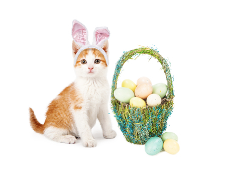 An adorable little kitten wearing Easter Bunny ears sitting next to a pretty straw basket filled with colorful eggs photo