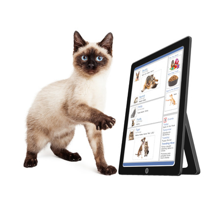Cute kitten scrolling through a social media website on a tablet device