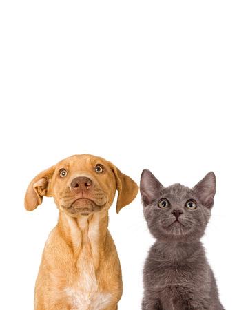 귀여운 어린 강아지와 새끼 고양이의 근접 촬영 이미지 함께 빈 copyspace에 올려