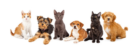 white space: A large group of young kittens and puppies together Stock Photo