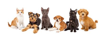 Een grote groep jonge kittens en puppies samen