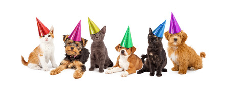 A large group of young kittens and puppies together wearing colorful party hats
