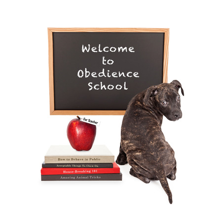 Cute puppy in front of a chalk board that reads Welcome to Obedience School with a pile of dog training books and an apple for the teacher.