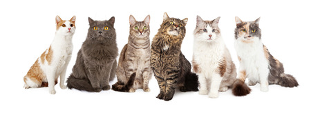 A group of six cats sitting together. Image sized to fit into a popular social media timeline cover image placeholder