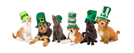 젊은 새끼 고양이와 강아지의 큰 그룹이 함께 녹색 성 패트릭의 날 모자를 착용 스톡 콘텐츠