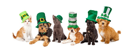 A large group of young kittens and puppies together wearing green St. Patrick's Day hats Stock Photo