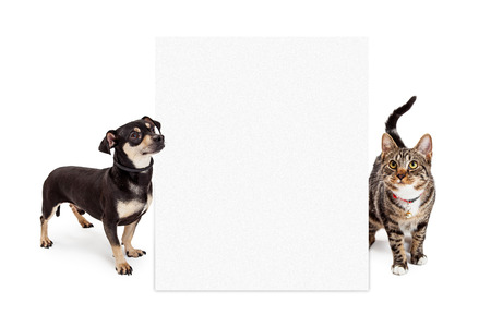 onto: A small mixed breed dog and a Bengal cat looking up at a blank white sign to enter your message onto Stock Photo