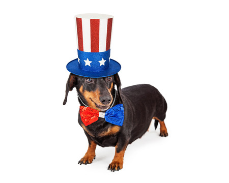 july 4th fourth: A cute Dachshund breed dog wearing a patriotic red, white and blue hat and tie to celebrate America