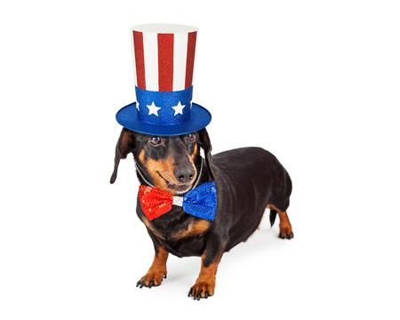 julio: Un lindo perro de raza Dachshund llevaba un sombrero rojo, blanco y azul patriótico y corbata para celebrar América Foto de archivo