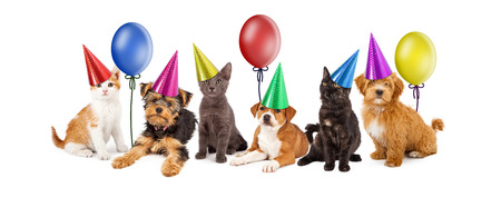 A large group of young kittens and puppies together wearing colorful party hats with balloons Stock Photo - 38565972