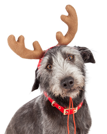 Closeup photo of a cute dog wearing Christmas reindeer antlers Zdjęcie Seryjne - 38566089
