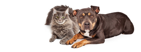 placeholder: Beautiful mixed breed dog and cat laying together. Image sized to fit a popular social media timeline cover image placeholder.