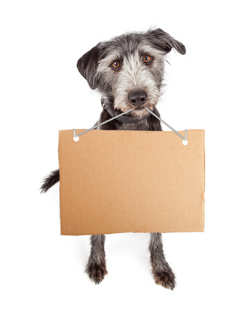 banner ads: Terrier mixed breed with a blank cardboard sign hanging from her mouth
