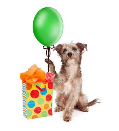 cadeau anniversaire: Chiot mignon tenant un ballon de parti vert avec un sac cadeau d'anniversaire color� Banque d'images