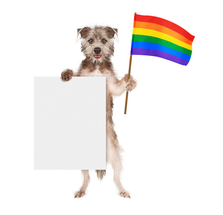 gay parade: A happy and smiling dog standing up and holding a blank white sign and a rainbow color flag symbolizing gay rights Stock Photo