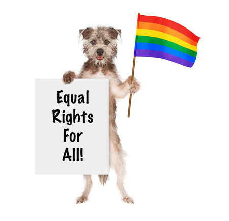 trans gender: Happy and smiling dog carrying a sign saying Equal Rights For All and a rainbow color flag to support gay rights