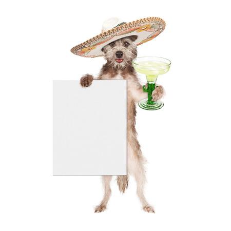 큰 멕시코 챙 넓은 모자를 착용 하 고 마가리타와 빈 흰색 기호를 들고 행복 하 고 웃는 강아지 찬 코 드 메이 요를 축 하 스톡 콘텐츠